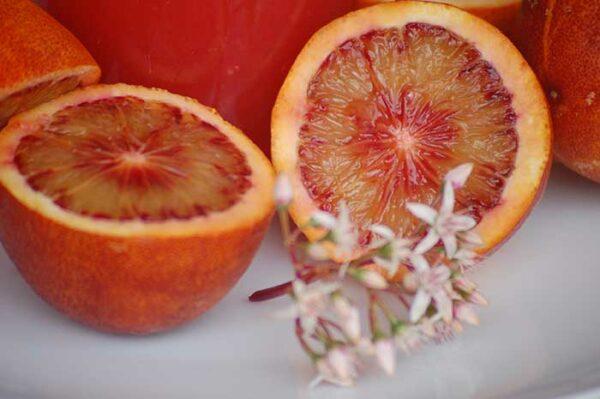 comprar naranjas sanguinas