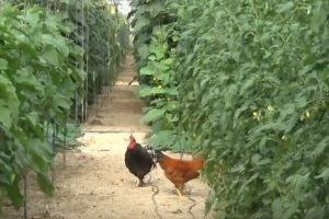 agricultura bio