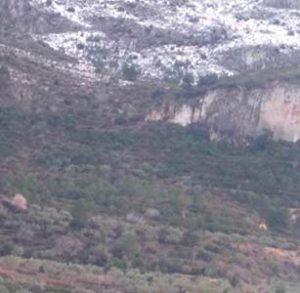 campo de olivos ecologicos