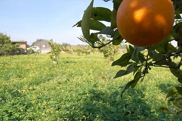 naranjas onlne