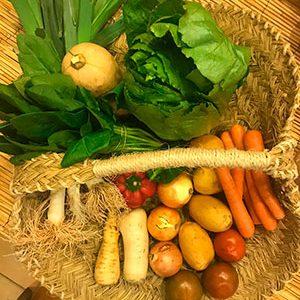 cesta de verduras ecologicas Valencia