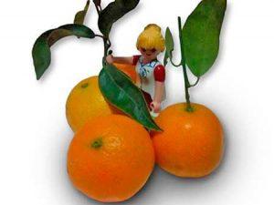 mandarinas bio para niños