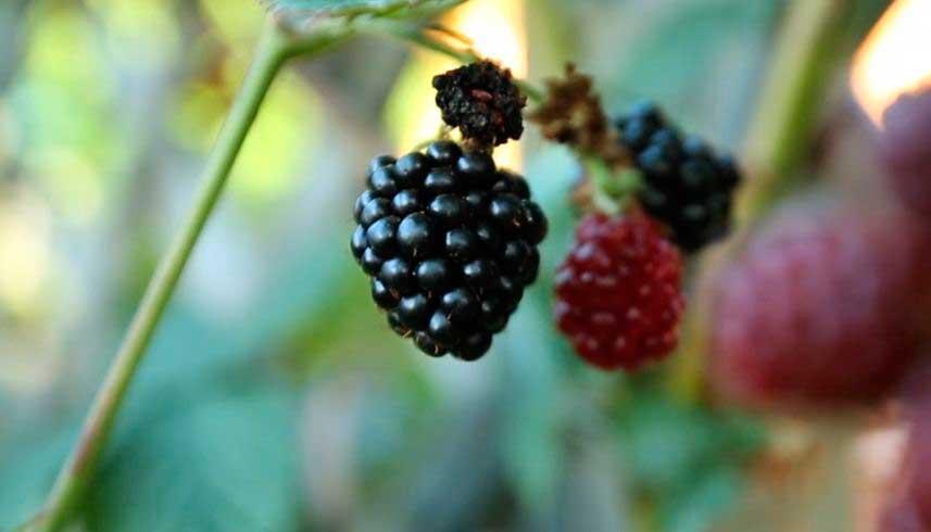alimentos ecologicos vistos por agricultor